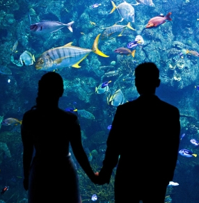 Tips-For-A-Fun-First-Date-An-Aquarium
