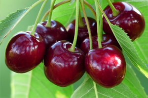 Food-That-Can-Help-You-Lose-Weight-cherry
