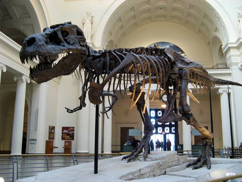 Fun-Museums-In-The-USA-Field-Museum