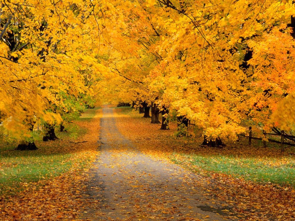 The Gold Rules For Golden Autumn